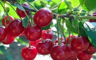 Как варить вишневый компот