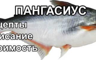Рыба пангасиус рецепт