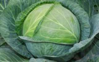 Как вкусно засолить капусту на зиму